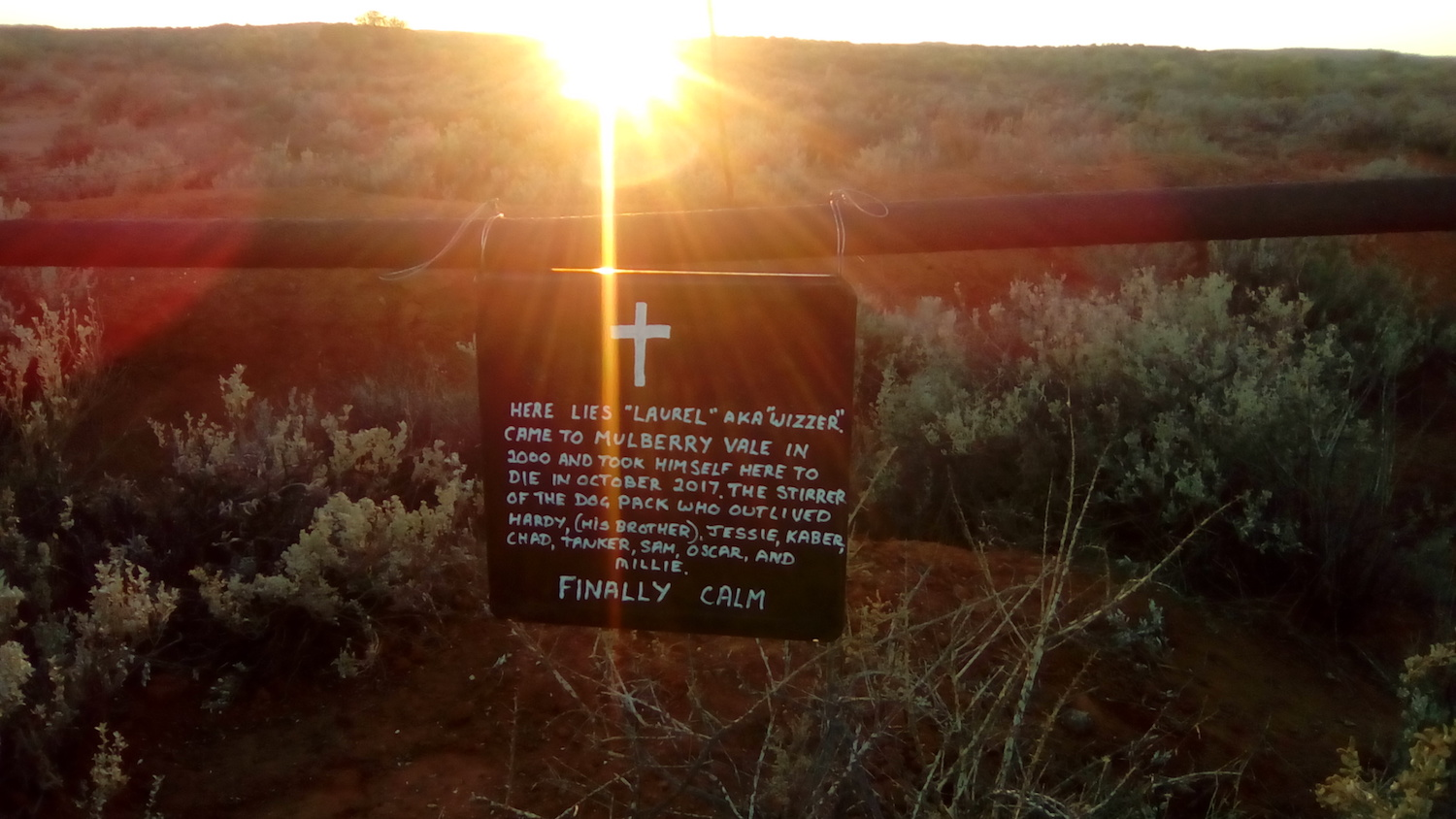 "The sun rises over a scrubby hill, and shows a sign hanging off a fence. The sign reads: ""Here lies 'Laurel' aka 'Wizzer'. Came to Mulberry Vale in 2000 and took himself here to dies in October 2017. The stirrer of the dog pack who outlived Hardy (his brother), Jessie, Kaber, Chad, Tanker, Sam, Oscar, and Millie. Finally calm."""