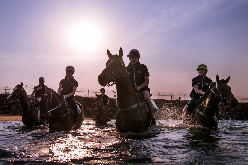 Horses wade towards the camera, the sun flaring behind them.