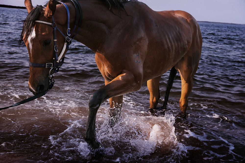 A horse splashes its hoof against a wave.